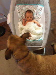 Even Stella learned some new things with the arrival of her brother! She is such a good protector!